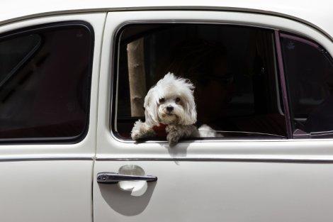 Zostawienie kota czy psa w samochodzie, skutkujące utratą przez niego zdrowia lub życia będzie w Michigan traktowane jak przestępstwo, za które grozi kara więzienia