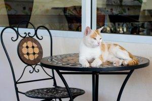 Koty będą rządziły w krakowskiej kawiarni.