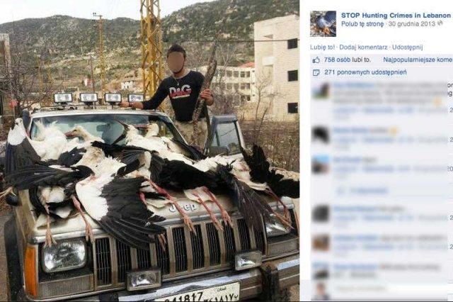 W Libanie masowo zabijająpolskie bociany