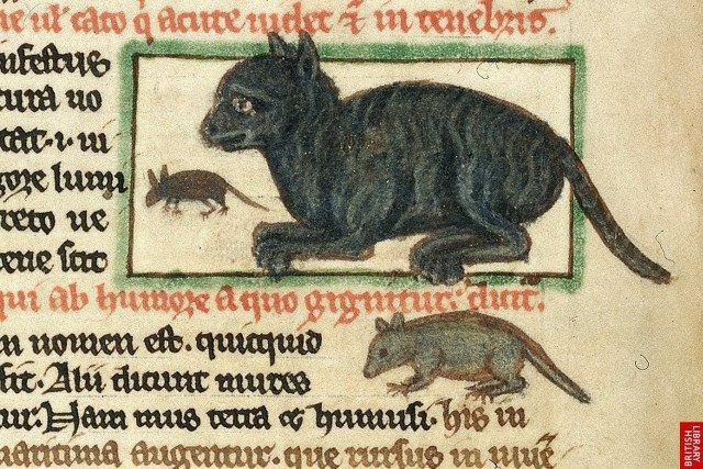 Koty, a zwłaszcza czarne koty, nie miały z ludźmi łatwego życia. Bywa, że nadal nie mają