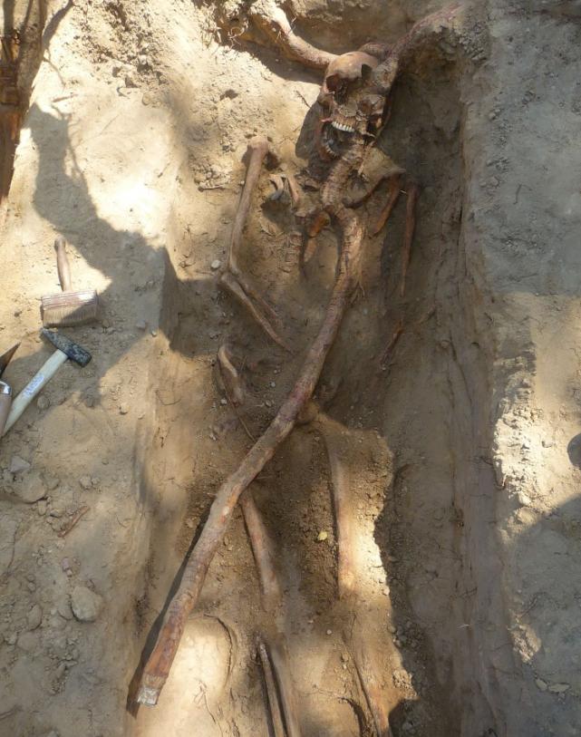 Jeden z odnalezionych szkieletów.