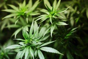 Izrael pozwolił chorym na padaczkę dzieciom stosować marihuanę