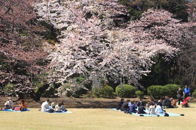 [url=http://shutr.bz/1e7wxcj] Hanami w parku Shinjukugyoen w Tokio [/url]