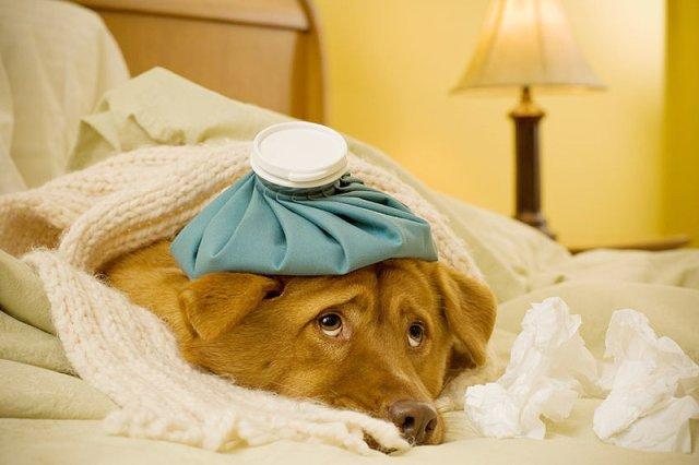 Urlop wychowawczy lub chorobowy na psa? W Wielkiej Brytanii to już nic dziwnego.