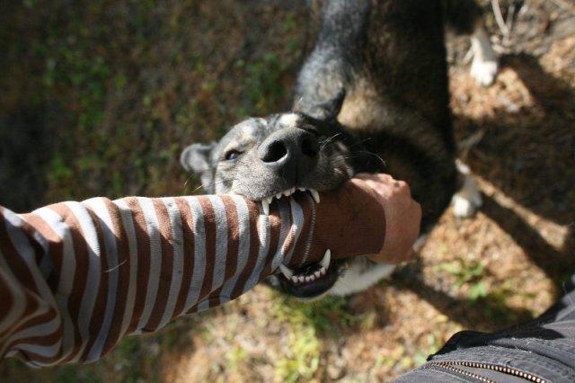 Problem psów bez kagańców to nie tylko ryzyko pogryzień - gorszy jest strach