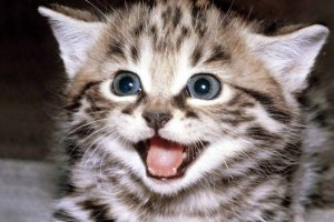 Dlaczego ten kotek sprawia, że na naszych twarzach gości uśmiech od ucha do ucha? Jest na to naukowe wytłumaczenie