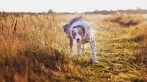 """Psie"" fotografie Anny Csernak"
