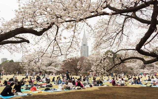 [url=http://shutr.bz/OayDB2] Hanami w tokijskim parku Shinjukugyoen [/url]