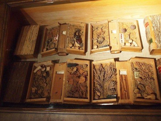 """A po otwarciu """"książki"""" – liście, owoce, wiórki, a nawet chrząszcze żyjące na danych gatunkach drzew."""