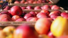 Jesienią polskie jabłka są najsmaczniejsze.