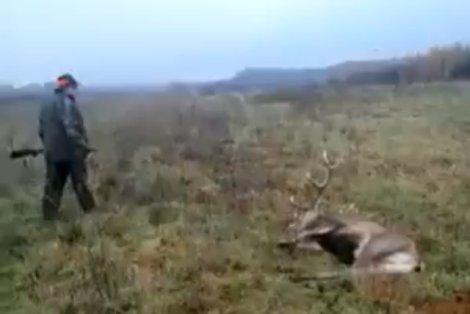 Myśliwi znęcają się nad postrzelonym jeleniem