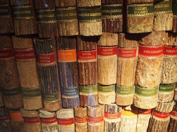Fantastyczna biblioteka dendrologiczna w Domu Długosza – oprawki książek są wykonane z kory drzewa opisanego wewnątrz...