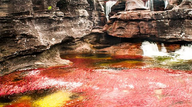 [url=http://commons.wikimedia.org] Caño Cristales[/url]