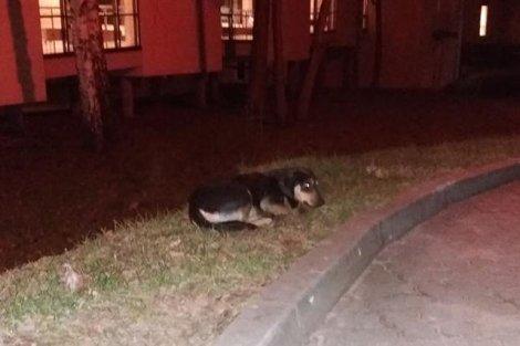 Pies czeka na psa, choć ten umarł