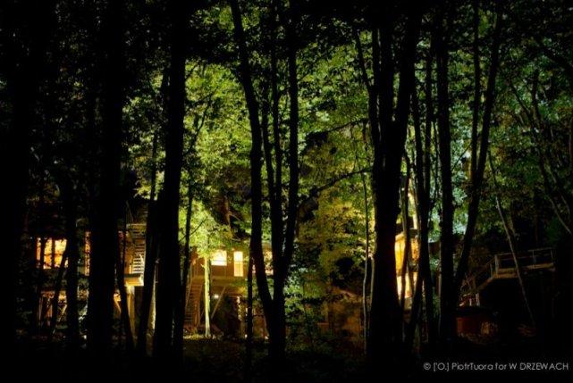 W drzewach nocą