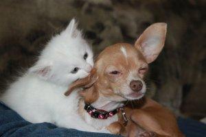 Psy ponoć kochają swoich właścicieli 5 razy mocniej, niż robią to koty – tak wskazują badania.