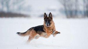 Fotografie psów autorstwa Żanety Żmudy-Koziny