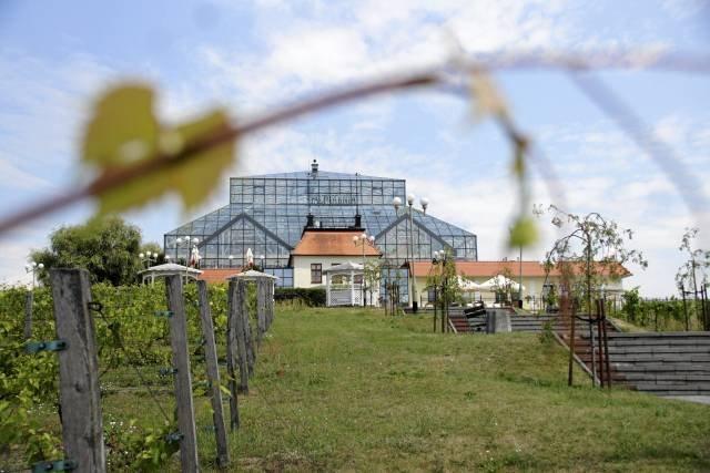 Palmiarnia na Winnym Wzgórzu oraz Stary Dom Winiarza, Zielona Góra