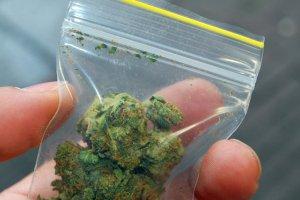 Marihuana dostępna dla 10 tys. ochotników przez 10 lat? Poznański instytut badawczy chce przeprowadzić eksperyment.