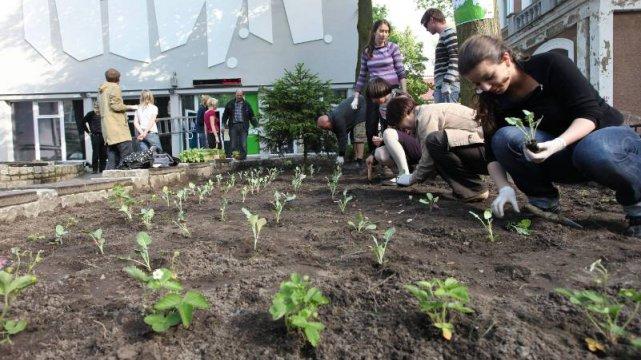 Akcja Kwiatuchi z 2009 roku. Przy zielonogórskim BWA powstał ogródek warzywny