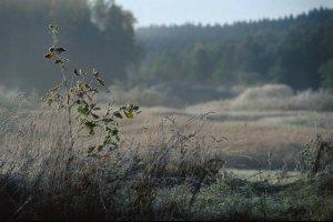 Puszcza Borecka - nad jednym z jezior siedliska ustąpią miejsca inwestycji księdza