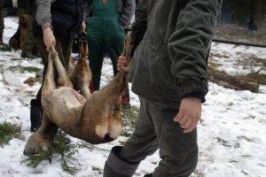 Myśliwi będą musieli strzelać do zwierząt pod karą grzywny.