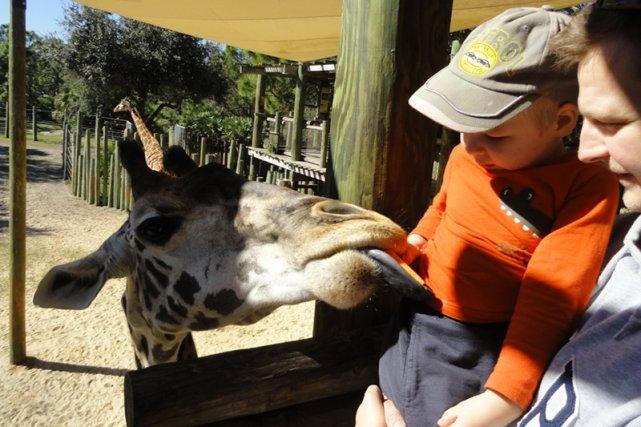 Zoo na Florydzie