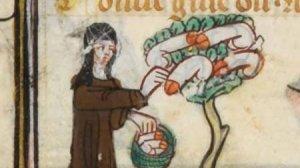 Zakonnica zbiera penisy na drzewie.